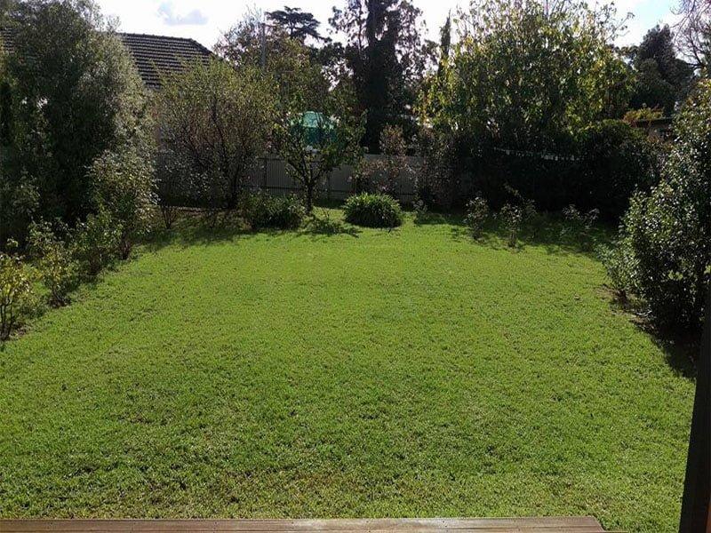 lawn mowed 1
