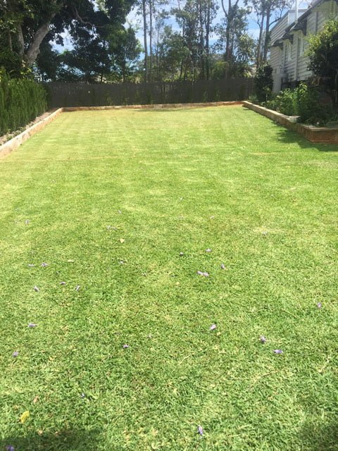 lawn freshly mowed