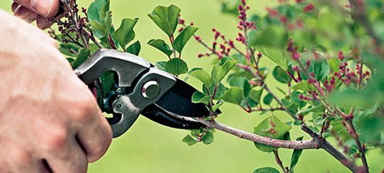 pruning selling your house