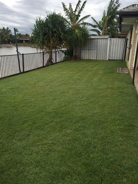 tidy lawn