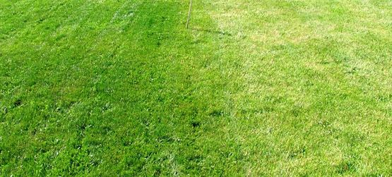 treated top dressing