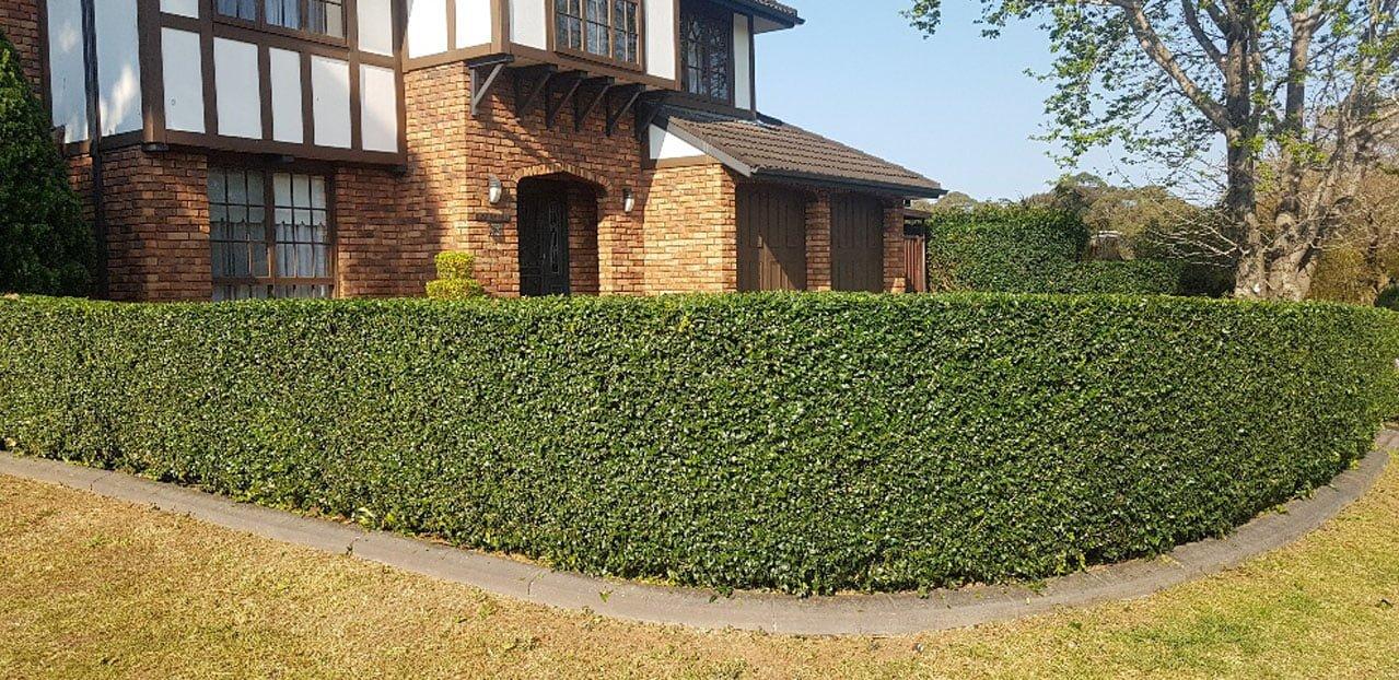 pro cut lawns browns plains hedge trimming